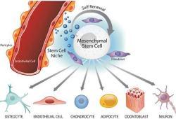 STEM CELLS Translational Medicine:间充质干细胞治疗重症COVID-19已取得突破性进展