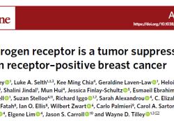 """Nat Med:雄激素受体:雌激素受体阳性乳腺癌的<font color=""""red"""">抑</font>癌因子"""