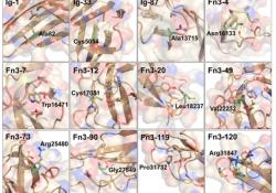 "Acta Neuropathologica: TTN相关<font color=""red"">先天</font><font color=""red"">性</font>肌病中的错义变异"