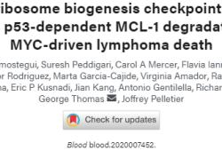 Blood:核糖体合成检查点激活障碍可诱导p53依赖性MCL-1降解和MYC驱动型淋巴瘤死亡