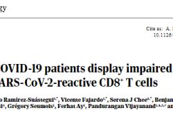 Sci Immunol:CD8+ T细胞对新冠病毒感染反应的多重分子特性