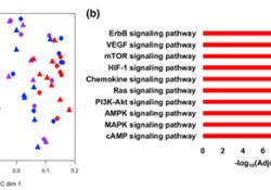 "Acta Neuropathologica: 多组分子图谱揭示了脑转移多种<font color=""red"">组织</font><font color=""red"">学</font>共有的潜在靶向异常"
