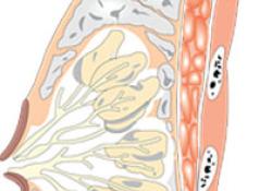 "<font color=""red"">ASCO</font>指南:早期乳腺癌的优化辅助治疗与靶向治疗"