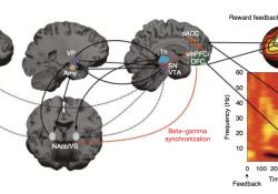 "Nat Med :拯救强迫症""晚期患者""!科学家发明高频神经调节疗法,5天治疗效果可持续3个月"