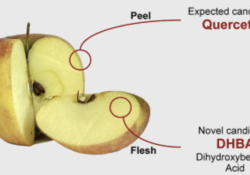 "Stem Cell Reports:苹果竟会增强<font color=""red"">大脑</font>功能?"
