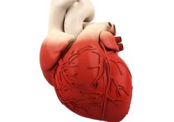 PLOS Medicine:多种血浆蛋白水平与冠心病患者心血管死亡相关