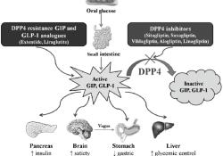 "<font color=""red"">ASCO</font> <font color=""red"">GU</font> 2021: DPP4抑制剂对糖尿病合并前列腺癌患者PFS的影响"