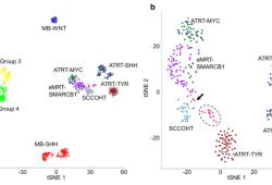 Acta Neuropathologica: 具有SMARCA4突变的非典型畸胎样/横纹肌样肿瘤在分子水平上不同于SMARCB1缺陷病例