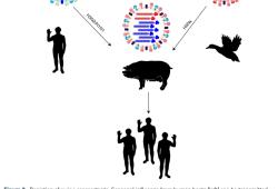 人类感染禽流感H5N8病毒,会不会造成下一个大流行?