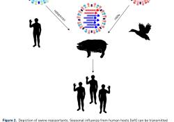 """人类感染<font color=""""red"""">禽流感</font>H5N8病毒,会不会造成下一个大流行?"""