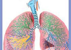 "Thorax:环境空气污染暴露与慢性<font color=""red"">支气管</font>炎"