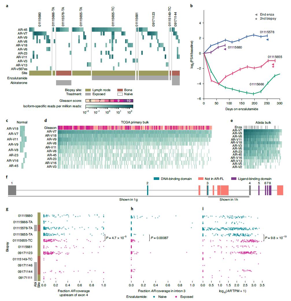 转移性去势抵抗性前列腺癌治疗耐药性的相关研究