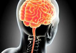 "Nat Commun:脑脊液的免疫细胞分析可表征<font color=""red"">脑</font><font color=""red"">转移</font>瘤微环境"
