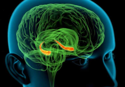 "J Neurosci:海马与人类衰老认知映射<font color=""red"">缺陷</font>有关"