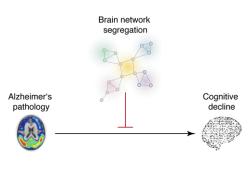 Brain:功能网络分离与阿尔茨海默病患者的认知弹性有关