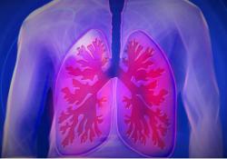 "Cell Death Differ:上皮和内皮<font color=""red"">细胞</font>衍生的外泌体调节肺泡<font color=""red"">巨噬细胞</font>的免疫平衡并影响多种肺部疾病"