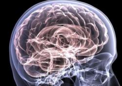 "Cell Death Differ:Hevin与calcyon的相互作用能够促进<font color=""red"">脑损伤</font>后突触的重组"