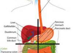 "2021 KSGE临床和<font color=""red"">技术</font>指南:<font color=""red"">超声</font>内镜引导下胰腺实体肿瘤组织获取"