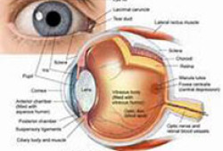 2021 AHA科学声明:视网膜中央动脉阻塞的管理