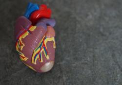 JAHA:心血管疾病死亡率与医保政策有关!