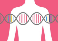 JAMA Netw Open:乳腺癌和卵巢癌患者致癌变异的携带情况