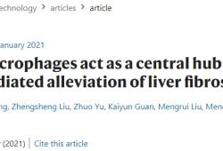 Nature Nanotechnology:松弛素通过肝巨噬细胞外泌体缓解肝纤维化