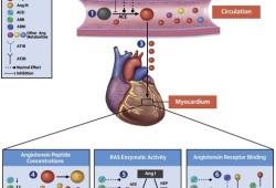 JACC:终末期心衰患者的心肌血管紧张素代谢