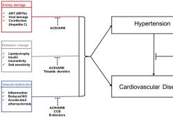 Hypertension:感染HIV的高血压患者降压药类别与心血管结局的关系