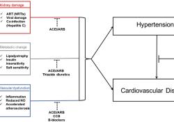 "Hypertension:感染HIV<font color=""red"">的</font><font color=""red"">高血压</font><font color=""red"">患者</font>降压药类别与<font color=""red"">心血</font><font color=""red"">管</font>结局<font color=""red"">的</font>关系"