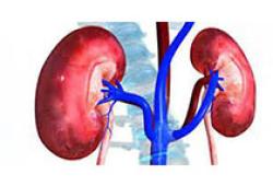 Diabetes Obes Metab:2型糖尿病患者中慢性肾脏病患病率和进展情况