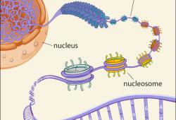 Nat Commun:怀孕会重编程乳腺细胞,进而降低乳腺癌发病风险