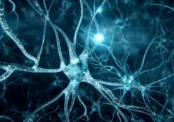 "Cell Reports:这种于精液中发现的<font color=""red"">物质</font>,可预防大脑早衰、延长寿命"