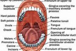 牙体牙髓病诊疗中口腔放射学的应用指南
