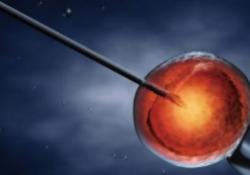 "AJOG:三代试管婴儿-植入前<font color=""red"">胚胎</font>活检是否会影响<font color=""red"">胚胎</font>植入后的妊娠结局?"