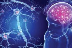 Brian:最常见的脑内病变——第一次脱髓鞘时大脑发生了什么变化?