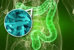 Gut: 粪菌移植有益于肥胖T2DM患者