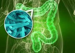 """Gut: 粪<font color=""""red"""">菌</font>移植有益于肥胖T2DM患者"""