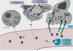 """Trends in Endocrinology& Metabolism:""""饿死""""癌细胞,氨基酸消耗疗法<font color=""""red"""">的</font>途径与挑战"""