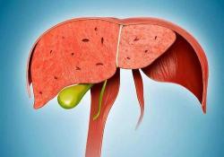 "Hepatology:肝纤维<font color=""red"">化</font>水平与多种心脏代谢疾病的发病相关"