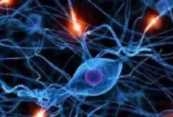 BMCGastroenterology:miRNA-202-3p是诊断1型胃神经内分泌肿瘤的潜在新生物标志物