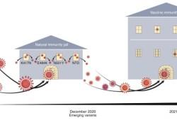 "Nature Medicine:如何消灭或防止SARS-CoV-2""越狱"""