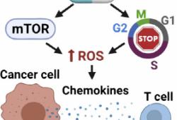 Cell Reports:CDK抑制剂与免疫疗法强强联手,复发性乳腺癌有救了