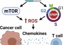 "<font color=""red"">Cell</font> Reports:CDK抑制剂与免疫疗法强强联手,复发性乳腺癌有救了"