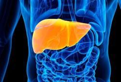 Hepatology:肝肾综合征患者对特利加压素和白蛋白的反应与肝移植的预后改善相关