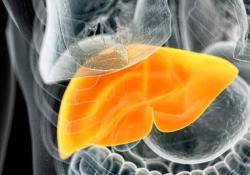 BMCGastroenterology:成人的腰高比和非酒精性脂肪肝疾病的相关性