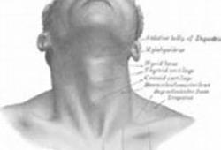 Laryngoscope:中耳炎患者中耳上皮细胞的RNA测序和通路分析