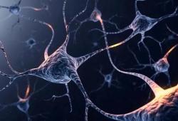 Nature:神经元活性促进肿瘤生长,原来又和它有关