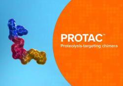 "J Med Chem: 双PROTAC来了:我国学者首次提出双重靶向<font color=""red"">降解</font>(Dual PROTACs)药物设计新概念"