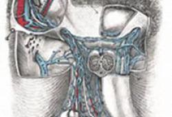 Eur Urol Focus:机器人部分肾切除术中的超选择性缺血并不能提供比肾动脉夹闭更好的长期肾功能结果