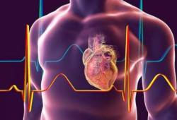 Nat Commun:单核细胞中昼夜节律钟基因改变是慢性肾病介导的心脏炎症和纤维化的基础